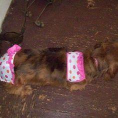 Georgia mea is a contestant for True Chews Dog of the Week! #TrueChews