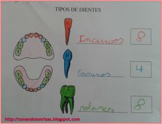 Soñando sonrisas...: Tipos y partes del diente