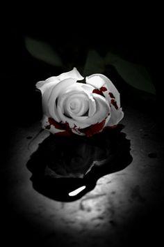 A rose for all Wallpaper Rose, Blood Wallpaper, Screen Wallpaper, Beautiful Roses, Pretty Flowers, Dark Flowers, Bleeding Rose, Rose Blood, Broken Rose