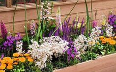 Zdjęcie numer 1 w galerii - Harmonijne, mozaikowe, tęczowe zestawy kwiatów w skrzynkach balkonowych