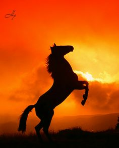 Quarter Horse Rearing A Red Orange Sky With Clouds Cute Horses, Pretty Horses, Horse Love, Most Beautiful Horses, Animals Beautiful, Cute Animals, Beautiful Places, Silhouette Painting, Horse Silhouette