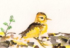 """baby sandpiper (from """"sixsisters"""" on etsy)"""