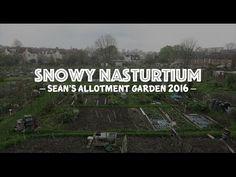 Sean's Allotment Garden: Snowy Nasturtiums (S4/EP27)   #growwithseanjc