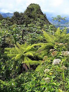 """Jayuya es el hogar de la montaña más alta de Puerto Rico, Cerro Punta, con una altura de 1340 metros (4389 pies). Rodeada de frio y neblina el """"Cerro Puntita"""" se impone entre las demás montañas. Con una ubicación muy particular entre las montañas del famoso Cerro Maravilla, el Cerro Punta se llena de misterio al ser la montaña más alta de Puerto Rico."""