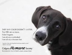 From the Calgary Humane Society's FB page. Very sweet and very true.