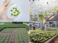 transforming crops