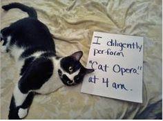"I diligently perform ""CAT OPERA"" at 4 am"