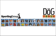 The Sporting Group Poster of The Dog Table of the EleMUTTs features whimsical illustrations of Dog Breeds that are recognized by the American Kennel Club and make up the Sporting Group. Best Dog Breeds, Best Dogs, Igloo Dog House, Dog Table, Groups Poster, American Dog, Dog Rooms, Dog Agility