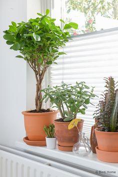 Stylingtip planten in de vensterbank ©BintiHome