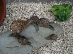 Snail home... Picture of Keeping Pet Snails @ Home