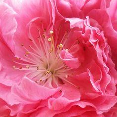 Blossom love up close