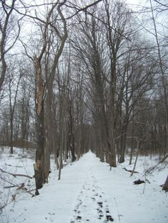 Straight and narrow pathway Cool Photos, Interesting Photos, Winter Scenes, Winter Snow, Pathways, Winter Wonderland, Trail, Scenery, Landscape