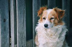 7 remédios caseiros para a tosse nos cães - Meus Animais