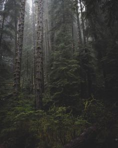 Nature Dark Green Aesthetic, Nature Aesthetic, Foggy Forest, Dark Forest, Forest Road, Half Elf, Hansel Y Gretel, Nature Sauvage, Slytherin Aesthetic