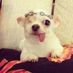 this 5-year-old chihuahua doesn't need two eyes to recognize her cuteness.