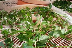 Growing and Dehydrating herbs - Great tips including when to harvest! Great article loaded with helpful info!