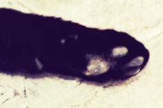 black and white filter....just a cute paw! DK Photography