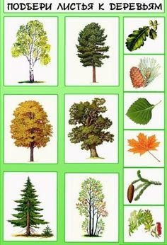 Можно распечатать готовый шаблон. Autumn Activities For Kids, Math For Kids, Science For Kids, Science And Nature, Teaching Plants, Montessori Kindergarten, Tree Study, Flower Names, Outdoor Crafts
