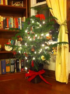 1000+ images about Norfolk Island Pine on Pinterest ...