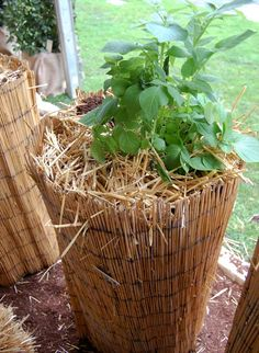 Genius potato growing tower! Cheaper and prettier than a tower of tyres.