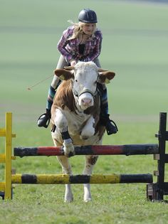 As seen on ITV News this week:    A 15-year-old girl whose parents refused to buy her a horse started showjumping with the next best thing - a cow.    Resourceful Regina Mayer turned to the animal, called Luna, to fulfil her dreams of riding after she wa Comfort is in a good  showjumping horse. Search all things dresage: http://www.galloperz.com/store