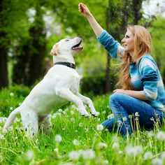 Hands-On Training: 5 Signals to Teach Your Dog: If you adopted a new puppy in honor of National Puppy Day today, you probably need some pointers on getting your new furry friend to learn commands.