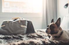 Denjo Dogs - Cloud7 Travel Bed.   #dogblanket #dogtravelbed #frenchbulldog #cloud7 #dogbag #hundfilt #hundväska #franskbulldog Tweed, French Bulldog, Grey, Interior, Dogs, Travel, Animals, Gray, Viajes
