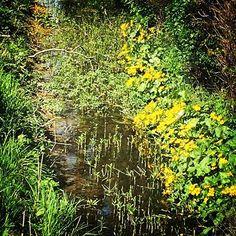 #sweden #sweden🇸🇪 #springday #spring2017 #springishere #springflowers #flowers #flower #flowerlovers #flowergram #ditchflowers #nature #naturephoto #naturelove  #Regram via @fromevaliwithlove)