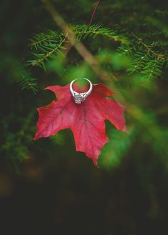 Engagement ring on red leaf by Muskoka wedding photographer Vaughn Barry Photography www.vaughnbarry.com
