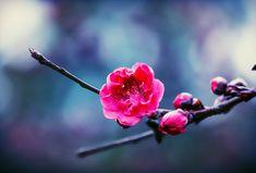 @____mikiko____♠♥♦♣ 今週もみんなよろしくね💖 . 笑顔でいられますように ❤💓💕 . いつもありがとうございます😇 . ✨非常感謝大家✨ . Thanks to everyone😉 #flowersandmacro  #flowersturk #rsa_macro #splendid_flowers  #flowersofinstagram  #flowerslovers #flowers  #_flowersworld_ #my_daily_flower #flora  #flowerstagram  #transfer_visions #nature_perfection #tv_community #floweroftheday  #agameoftones  #royalsnappingartists #igworldclub #exklusive_shot #neverstopexploring