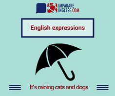 La pioggerellina inglese è ben nota, meno conosciuta è invece quest'espressione per indicare una pioggia pesante. Quando infatti 'piove a catinelle', a Londra 'piovono cani e gatti'!