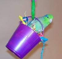 Toy pails are a popular item to hang in cages and provide your parrot a foraging opportunity. Pails come in all sizes, larger stainless steel for bigger parrots or small plastic toy pails like this one for the little birds.