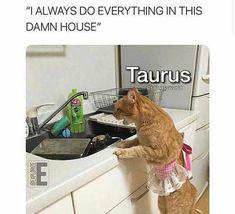 Taurus Art, Taurus Quotes, Taurus Memes, Astrology Taurus, Zodiac Signs Taurus, Nurse Cat, Kitten Rescue, Do Everything, Funny Animal Videos