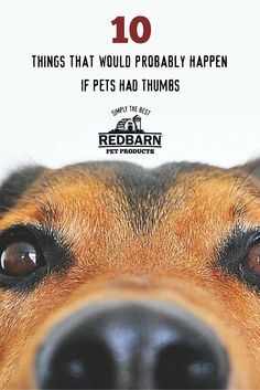 """In honor of """"If Pets Had Thumbs Day"""", we came up with some silly situations that could maybe happen if our pets had opposable thumbs."""