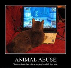 LOLCat: Animal Abuse. That cat should be outside playing baseball right now.
