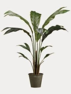 New old Hollywood/Beverly Hills chic  LPW333-GR                                              4' Chamaedorea Palm Tree in Tin Pot Green