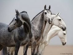 """Shades of Grey"" - Custom Painted Model horses, by Braymere Custom Saddlery"