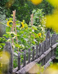 Sunflowers growing along a rustic fence hint at the property's farm roots.
