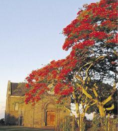 Mauritius | 'n Kerkie in die Franse boustyl by flamboyants