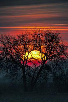 Tree of the sun | by Wojciech Grzanka