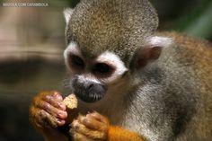 Zooparque Itatiba - o maior zoológico particular do Brasil