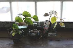 The Houseplant You'll Never Kill http://blog.freepeople.com/2013/02/houseplant-kill/