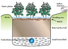The pin is about how the soil is well drained in the undergound water. It also moist the soil.