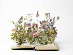 Lecture de fleurs