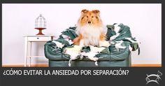 Aprende aquí cómo evitar la ansiedad por separación en perros y olvídate de los daños que puede llegar a causar tu mascota cuando se encuentra sola. Ingresa Aquí >>> http://sobreperrosygatos.com/evitar-ansiedad-por-separacion/