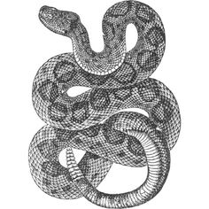 rattlesnake drawing -... ❤ liked on Polyvore featuring fillers, drawings, art, backgrounds, animals, doodles and scribble