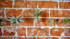 Billedresultat for styling af airplants Air Plants, Herbs, Painting, Art, Style, Art Background, Swag, Painting Art, Kunst