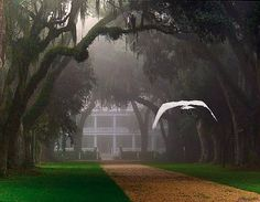 Butler Greenwood Plantation Photos | All The Trappings: Charming Cities Of The South Series Part I • St ...