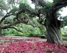 Brookgreen Gardens is a sculpture garden and wildlife preserve, located just south of Murrells Inlet, South Carolina.