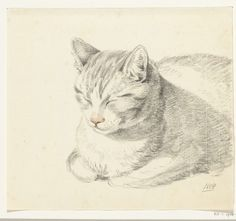 Cat sketch ~ artist Jean Bernard, c.1808; Rijksmuseum, Netherlands  #art #illustration